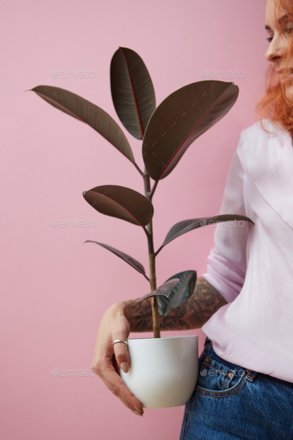 Red-haired happy girl with a tattoo holding a flowerpot with a ficus plant on a pink background with - Stock Photo - Images
