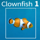 Clownfish 1 - VideoHive Item for Sale