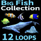 Fish Collection - VideoHive Item for Sale