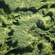 Wind damage on wheat - PhotoDune Item for Sale