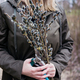 Woman in nature holding pussy willow branches - PhotoDune Item for Sale