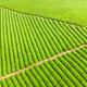 beautiful tea plantation - PhotoDune Item for Sale