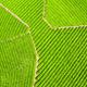 aerial view of spring tea plantation - PhotoDune Item for Sale