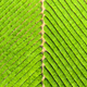 tea plantation background - PhotoDune Item for Sale
