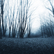 scary twisted trees in haunted forest, Halloween forest backgrou - PhotoDune Item for Sale