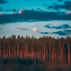 Full Moon Rising Above Pine Forest Landscape In Belarus Or Europ - PhotoDune Item for Sale