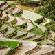 Rice field terraces. Near Sapa, Mui Ne - PhotoDune Item for Sale