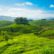 Tea plantations - PhotoDune Item for Sale