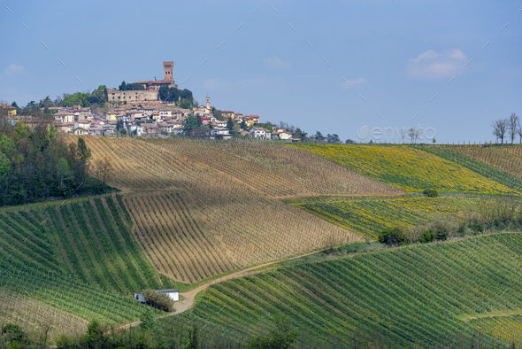 Vineyards of Oltrepo Pavese in April - Stock Photo - Images