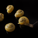 Yellow snails posing on black background - PhotoDune Item for Sale