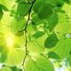 fresh green foliage - PhotoDune Item for Sale