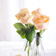 Beautiful fresh cut beige Roses in glass vase on light background. Minimal floral composition for - PhotoDune Item for Sale