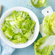 Fresh chinese napa cabbage salad - PhotoDune Item for Sale