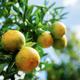 Orange on tree at sky - PhotoDune Item for Sale