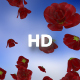Rose - VideoHive Item for Sale
