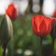 Spring in Netherlands - PhotoDune Item for Sale