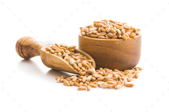 Healthy spelt grains. - Stock Photo - Images