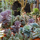 Different kinds of succulents in a greenhouse. - PhotoDune Item for Sale