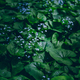 Full frame of forget-me-nots in the moonlight in the meadow. - PhotoDune Item for Sale