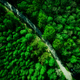 Green pine forest and rural road. Aerial drone view from above - PhotoDune Item for Sale