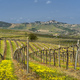 Vineyards of Oltrepo Pavese in April - PhotoDune Item for Sale