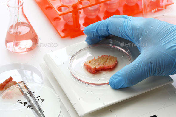 cultured meat making image, lab grown meat concept - Stock Photo - Images