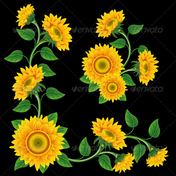 Sunflowers - Flowers & Plants Nature