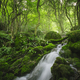 Wild green forest with waterfall - PhotoDune Item for Sale