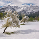 When spring meets winter in the full blossom season - PhotoDune Item for Sale