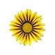 Gacaniya yellow - PhotoDune Item for Sale