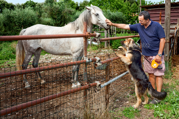 Horse Dog And Man - Stock Photo - Images