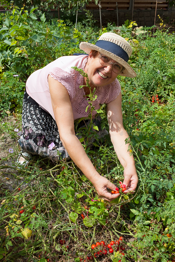 Cheerful Senior Woman Gardening - Stock Photo - Images