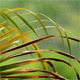 Palm Leaf In The Rain Slow Motion - VideoHive Item for Sale
