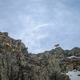 Chamois perched on a rocky ridge - PhotoDune Item for Sale