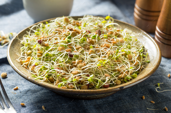 Raw Organic Bean Sprout Salad - Stock Photo - Images