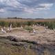seagulls in Danube Delta, Romania - PhotoDune Item for Sale