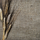 Wheat - PhotoDune Item for Sale