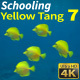 Schooling Yellow Tang 7 - VideoHive Item for Sale