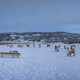 Panorama of mountain winter landscape with Reindeers - PhotoDune Item for Sale