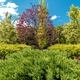 Beautiful Backyard Garden Plants - PhotoDune Item for Sale