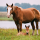 Adult Brown Horse And Foal Young Horse Grazing On Green Meadow N - PhotoDune Item for Sale