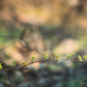 Young Spring Green Leaf Leaves Growing In Branch Of Forest Bush - PhotoDune Item for Sale