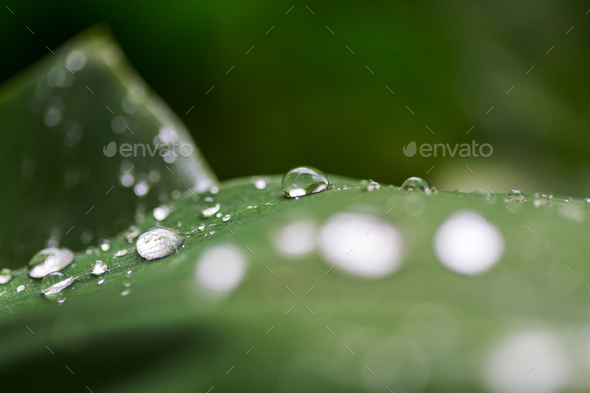 Drops - Stock Photo - Images