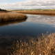 river with golden color grass at princetown wetland australia - PhotoDune Item for Sale