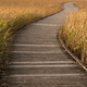 wooden boardwalk passing through golden colour grass  - PhotoDune Item for Sale