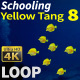 Schooling Yellow Tang 8 - VideoHive Item for Sale