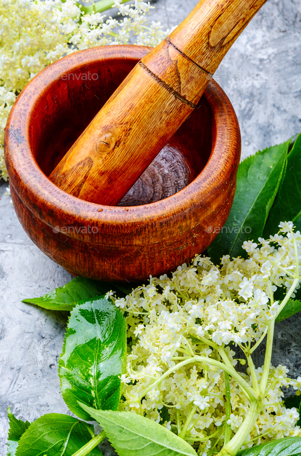 Blossoms of the elderberry - Stock Photo - Images