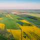 Natural Green Field With Trails Lines In Blooming Canola Yellow - PhotoDune Item for Sale