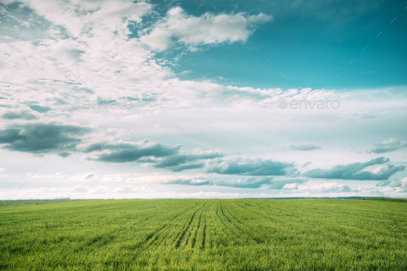 Countryside Rural Field Meadow Landscape In Summer Cloudy Day. S - Stock Photo - Images