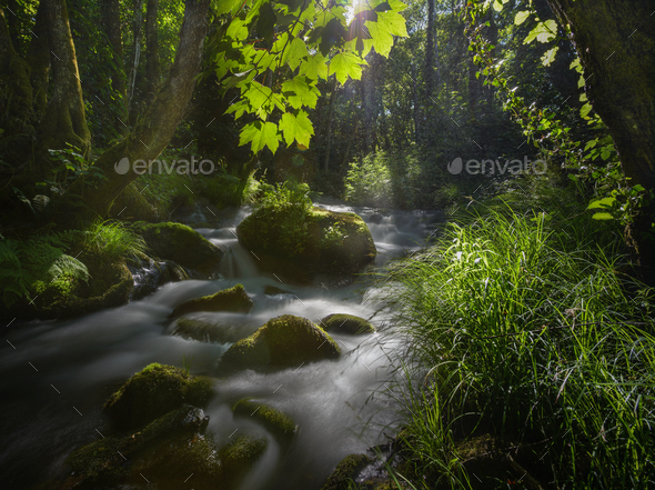 Sunlight filtered by the leaves of maple trees on a stream - Stock Photo - Images